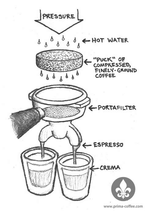 Espresso 101: What is it?   Prima Coffee
