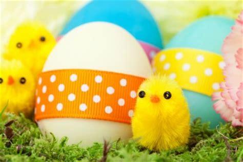 wallpaper anak ayam anak ayam dan telur paskah makanan gratis foto download gratis