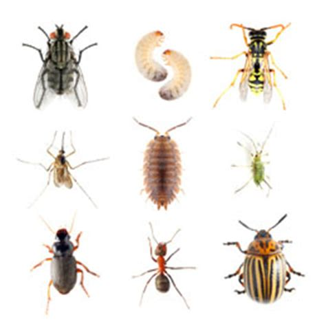common house bugs common household bugs and ways to keep them away