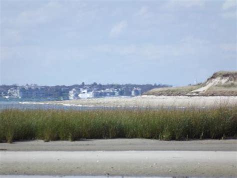 cape cod wildlife center morris island picture of monomoy national wildlife