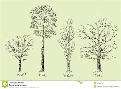 tree species tree species stock vector image 51388611