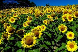 Pelangi Di Negeri Matahari pelangi pengetahuan luas anak negeri indonesia bunga