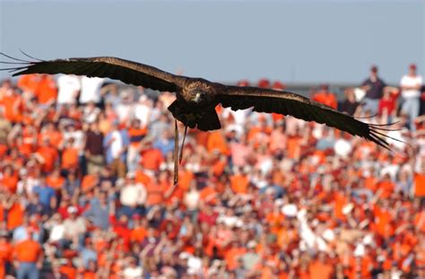 when the iron eagle flies war eagles of the past a brief history of auburn s high
