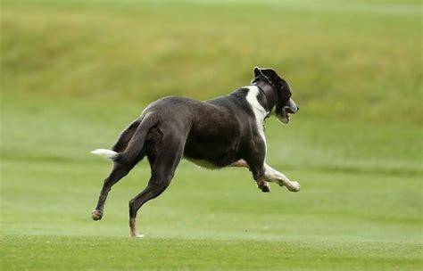 hund hat pilz im garten gefressen warum fressen hunde eigentlich gras
