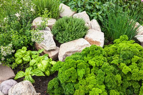 file herb garden spring blooms huntington jpg pretty images of herb gardens photos landscaping ideas