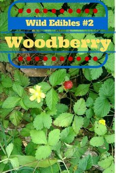 1000+ images about foraging: strawberry (wild) on