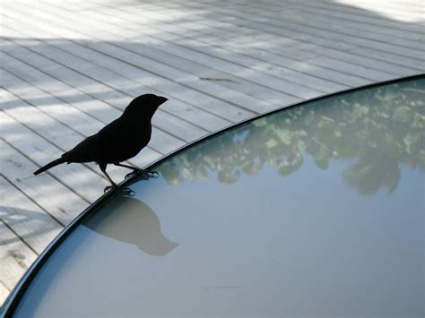 sick of bird droppings keep birds your patio with