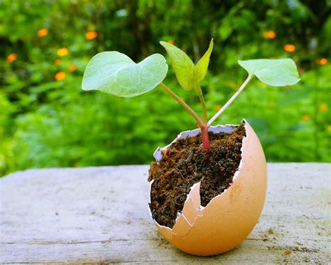hortensien stecklinge stecklinge vermehren stecklinge hortensie und