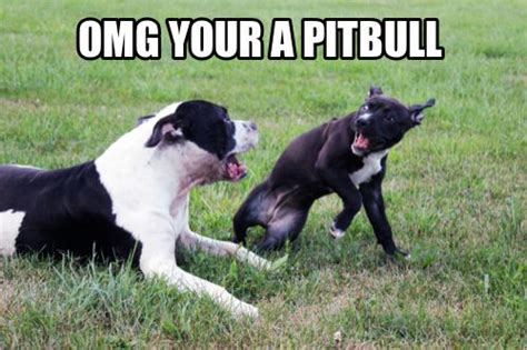 Pitbull Puppy Meme - 111 best images about cute on pinterest fun dog puppys