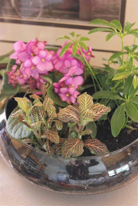 terrarium le quot isabelle thornton quot le chateau des fleurs the