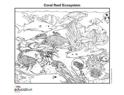 cabins in the woods grayscale coloring book books pond clipart ecosystem pencil and in color pond