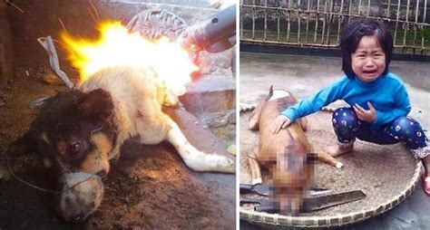 yulin festival in china controversial festival may undergo crackdown by authorities world