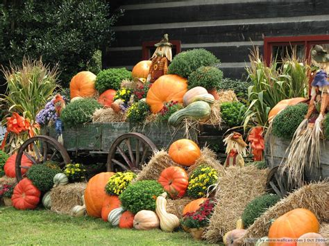 pumpkin displays autumn display scarecrow pumpkins wallpapers pumpkins