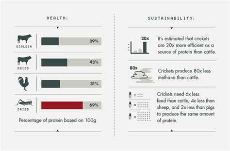v protein powder price in india is cricket flour the new protein powder by daily burn