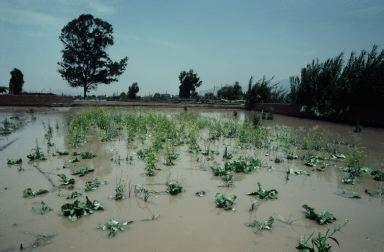 deforestation flooding