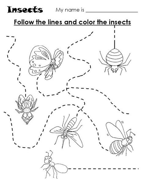 preschool coloring pages bugs insects trace worksheet suni pinterest worksheets