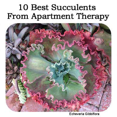 How To Propagate Cacti Succulents Apartment Therapy - 1693 best images about succulents and terrariums on