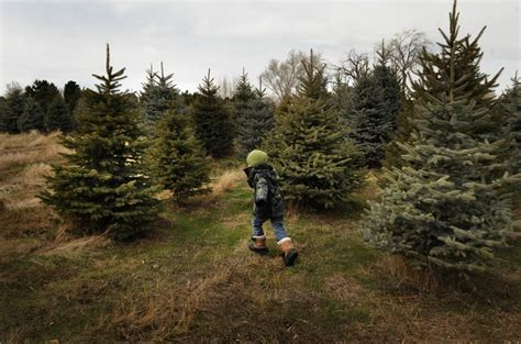 collection of christmas tree farming business plan best