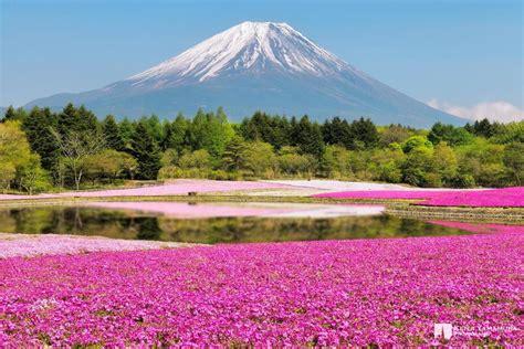 parco co dei fiori i 5 luoghi pi 249 colorati sulla terra www treedom net
