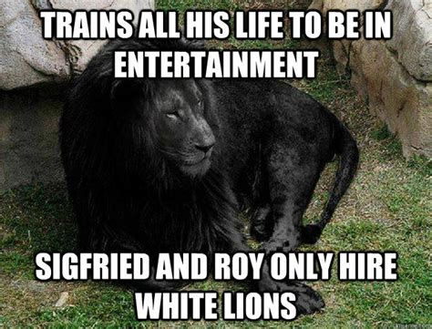 Lion Meme - sea lion meme memes
