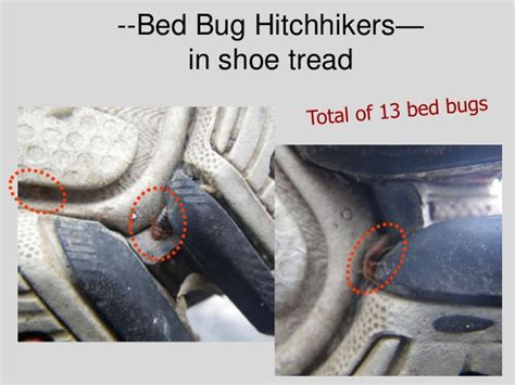 bed bugs shoes boric acid for bed bugs the sticky side the nonsticky