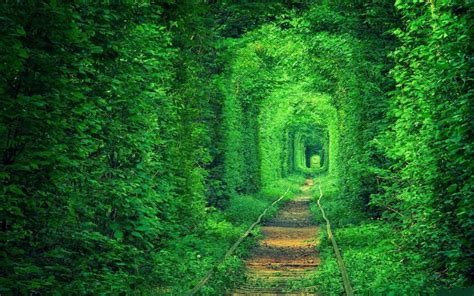 10 of the most amazing 10 of the most amazing tree tunnels