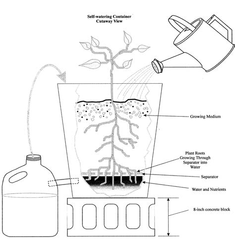 Self Watering Planters 5 Gallon Buckets by Self Watering Containers Of Maryland Extension
