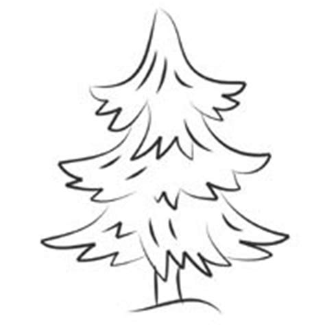 coloring page of evergreen tree evergreen tree coloring pages