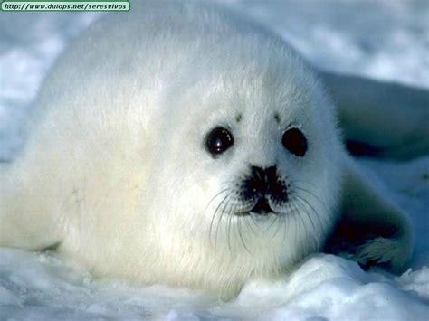 imagenes de animales acuaticos y terrestres animales acu 225 ticos los animales