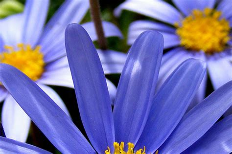 fiori color indaco cromoterapia 6 indaco la zitella felice