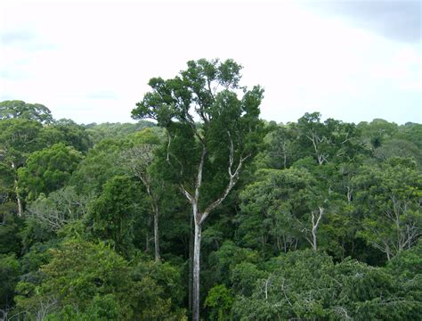 canopy amazon news amazon inhales more carbon than it emits nasa finds