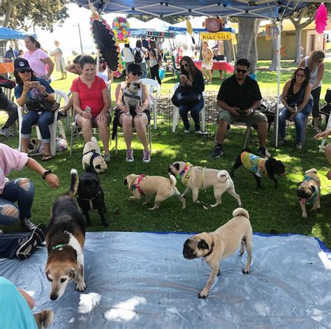 pug meetup san diego weekly lifestyle review post c est christine