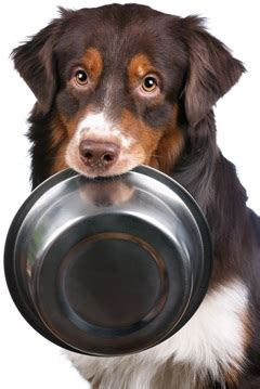coconut bad for dogs is coconut or bad for dogs the surprising