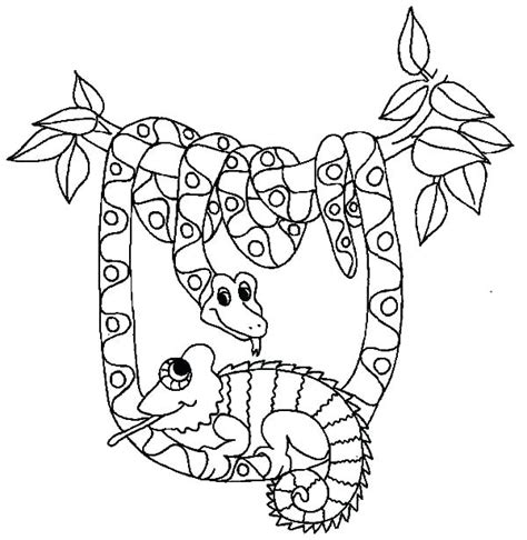 milk snake coloring page snake for coloring snake coloring sheets snakes color page