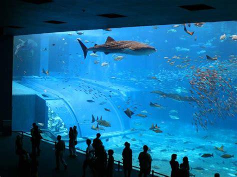 Que Faut Il Pour Un Aquarium by Acheter Un Aquarium