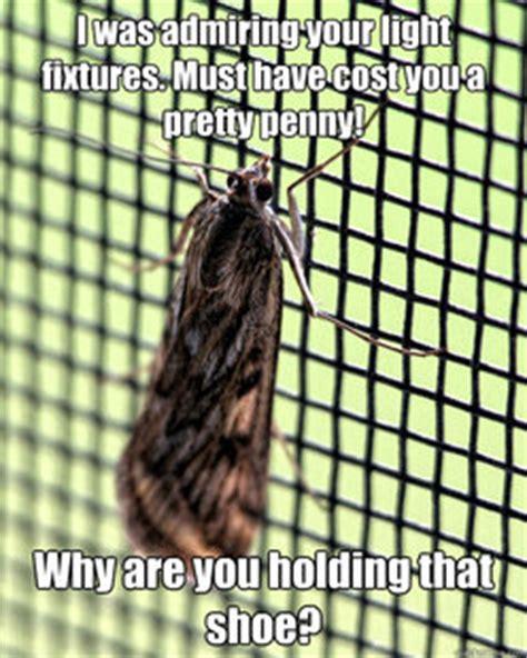 Moth Meme - moth meme memes