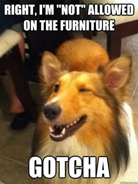 funny animal pictures 20 hilarious animal pictures to end the week properly