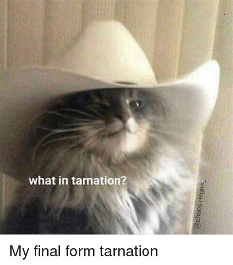What In Memes - what in tarnation my final form tarnation meme on me me