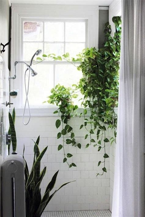 plants for bathroom with no windows welche zimmerpflanzen brauchen wenig licht