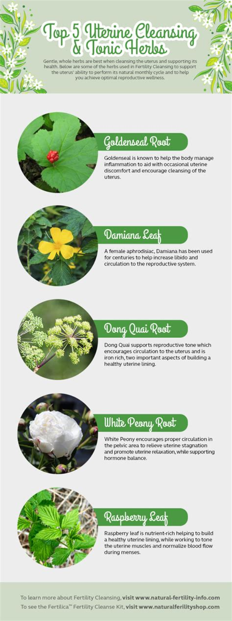 How To Detox The Uterus by Top 5 Uterine Cleansing Tonic Herbs