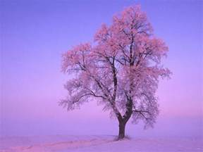 winter tree winter trees wallpapers wallpaper cave
