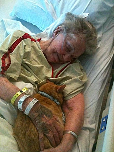 how to make a cat comfortable when dying her cat s presence brings love and comfort to woman dying