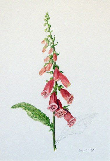 watercolor tattoo hannover foxglove botanicals watercolor and