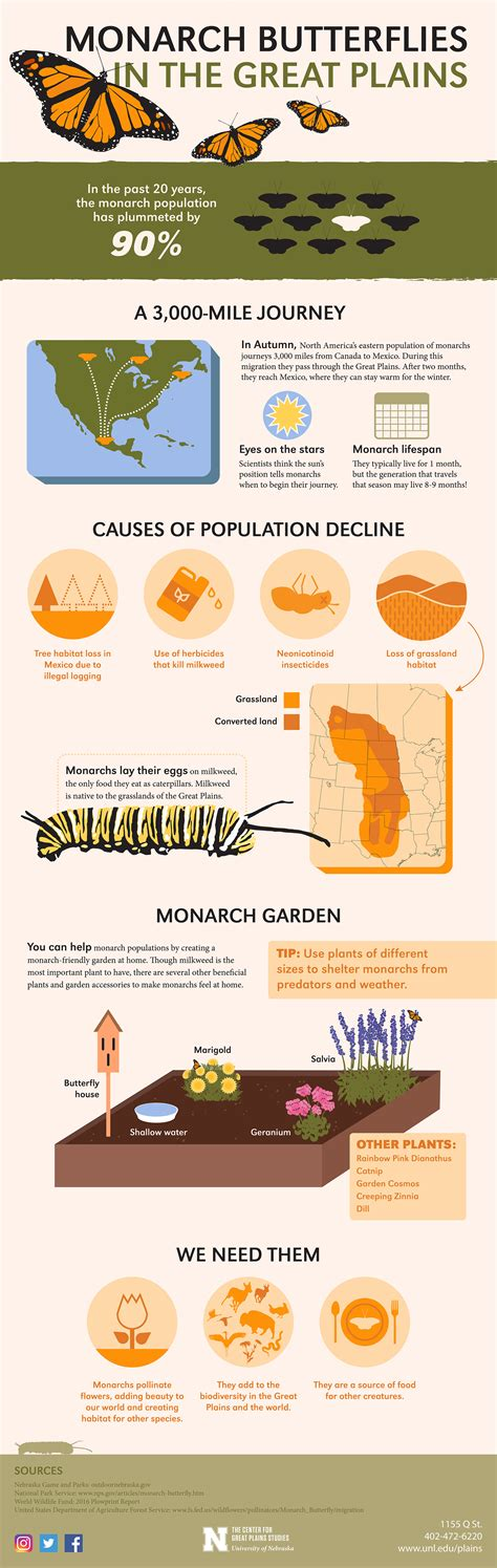 Fossil Serut 3in1 1155 06 infographic monarchs in the great plains visit the prairie the great plains ecotourism
