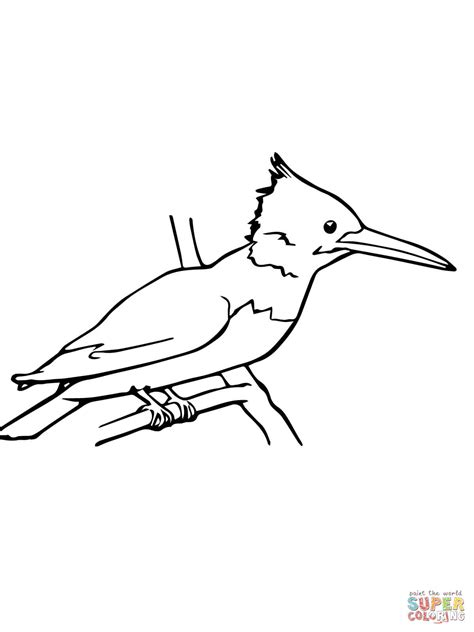 kingfisher coloring pages kingfisher coloring page free printable coloring pages