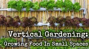 How To Grow Vertical Garden Vertical Gardening Growing Food In Small Spaces