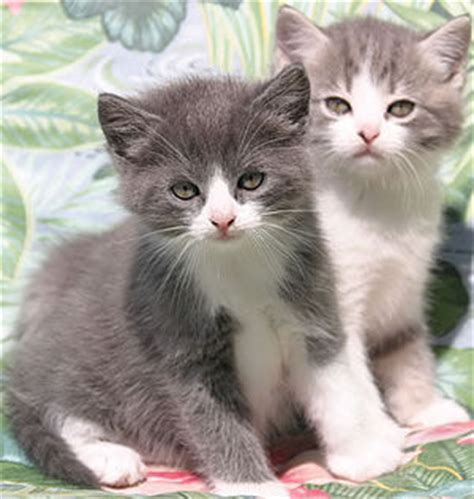 Meine Baby Katzen Wallpaper Images Free Zaloro