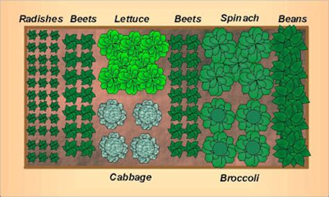 Garden Designs And Layouts Growing The Home Garden Fall Vegetable Garden Plans