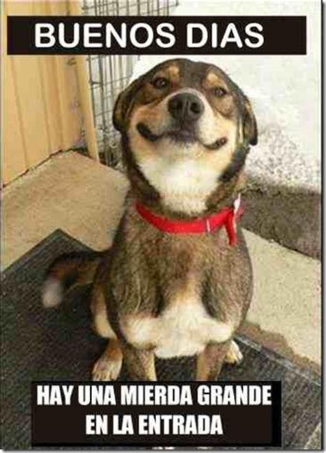 imagenes chistosas de buenos dias con frio cosas divertidas humor buenos d 237 as dice el perro