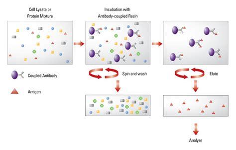 science salt ls co immunoprecipitation co ip thermo fisher scientific ls